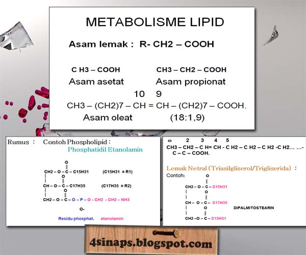 Overview of Lipid Metabolism