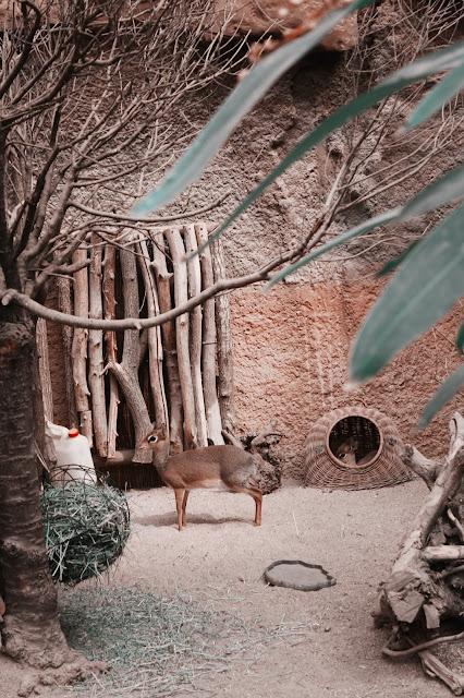 wrocław zoo