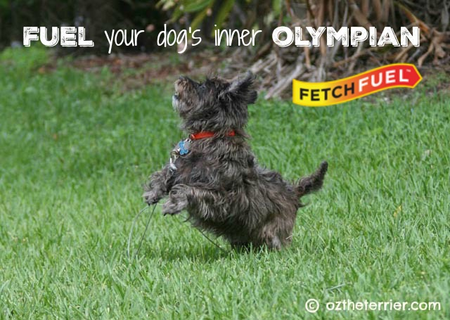 oz running - fuel your dog's inner olympian with fetchfuel