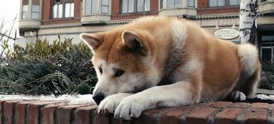 hachiko siempre a tu lado dog film perro película lasse hallstrom hallström