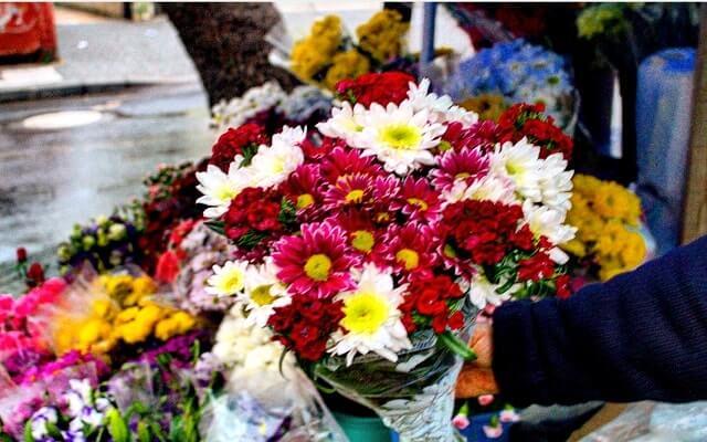 Yıldönümü-çiçeği
