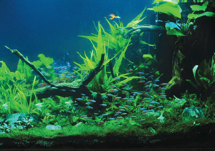 desain aquascape international exotic aquarium