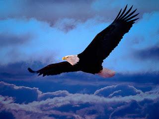 O voo da águia é uma promessa de Deus para os que espera nEle.