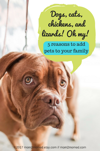 Mom2MomEd Blog: Dogs, cats, chickens, and lizards! Oh my! 5 reasons to add pets to your family