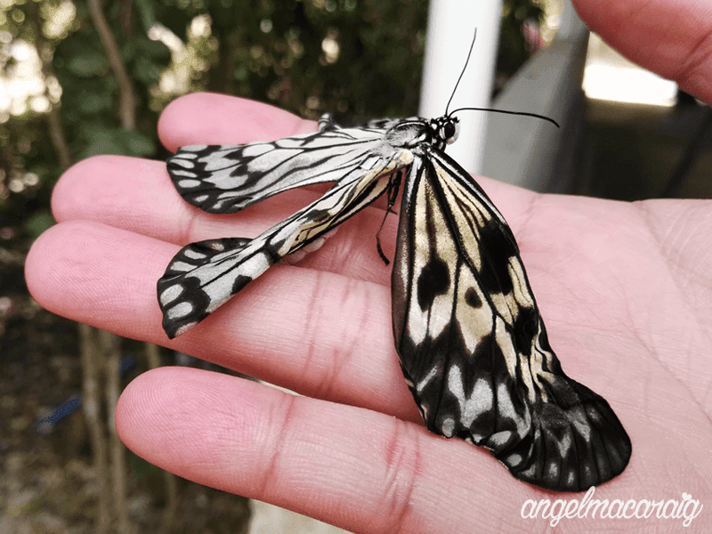 Palawan Butterfly Garden and Tribal Village Pictures and Videos