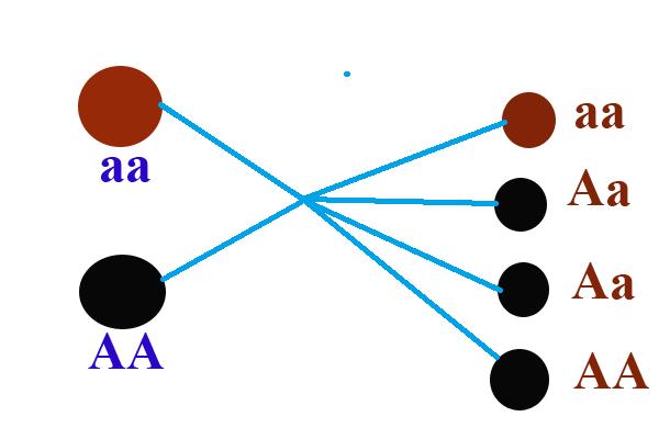 Quy luật tổ hợp gen cơ bản khi nhân giống