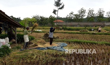 Resahnya Para Petani di Lumbung Beras