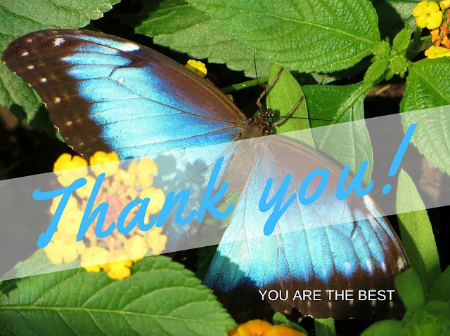 Image: Gratitude, by Annerose Walz on Pixabay