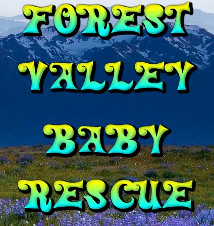 Games2Rule Forest Valley …