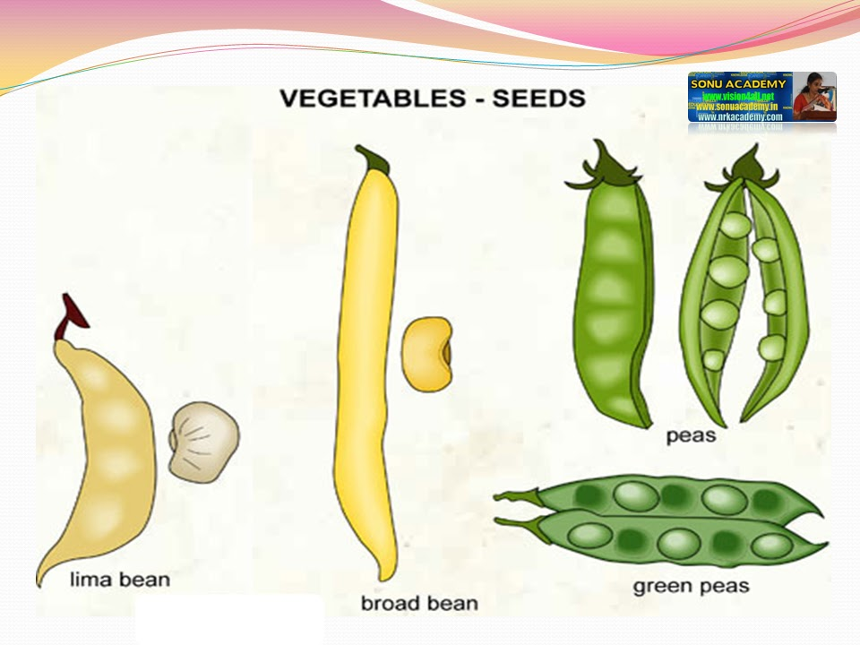 Seed | form, function, dispersal, & germination | britannica. Com.