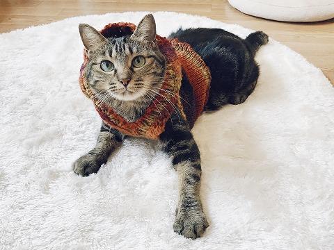 2作目の猫用セーター試着中