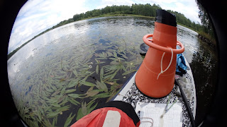 Keiholehtien lehtiä vedenpinnalla, sup-lauta ja vesikiikarit.
