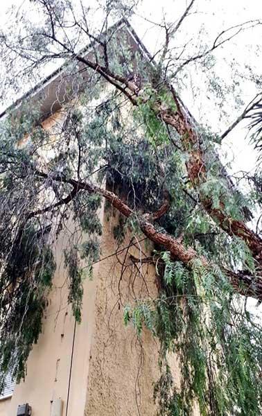 Un árbol cae sobre una casa en Schamann