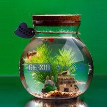 aquarium bulat aquascape