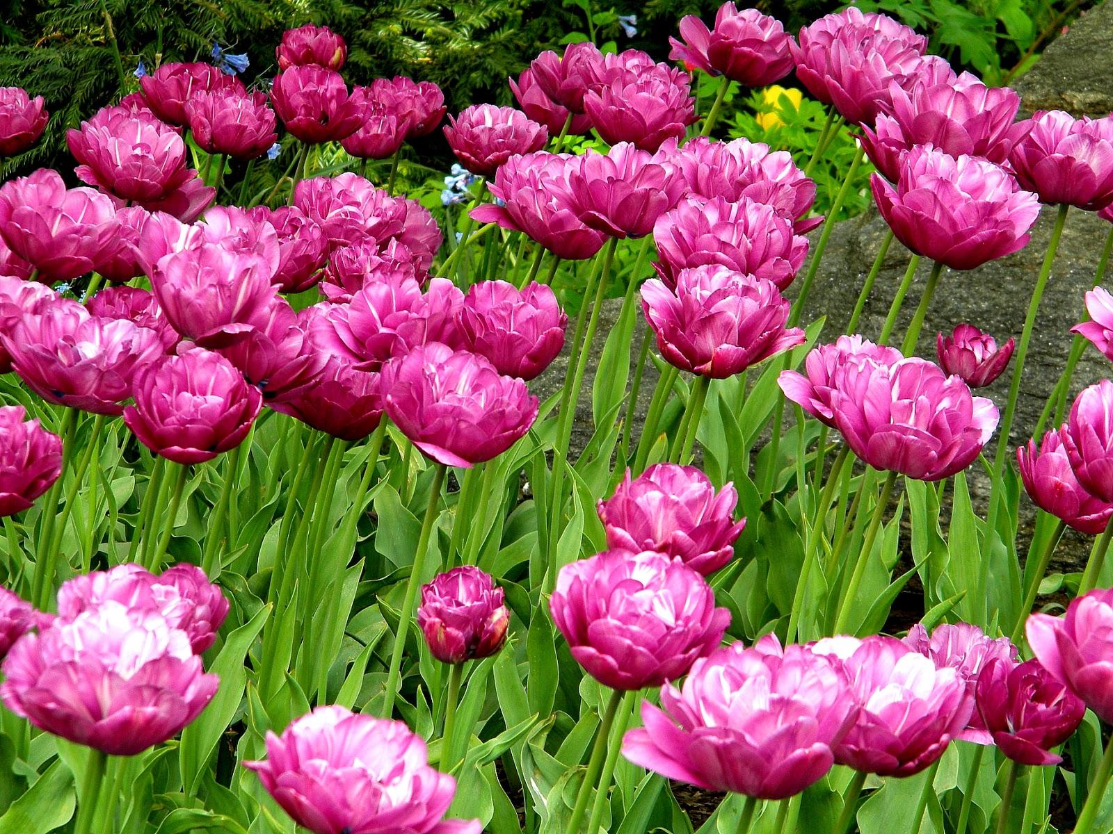 Spring Flowers Central Park Clip Art Public Domain Clip ...