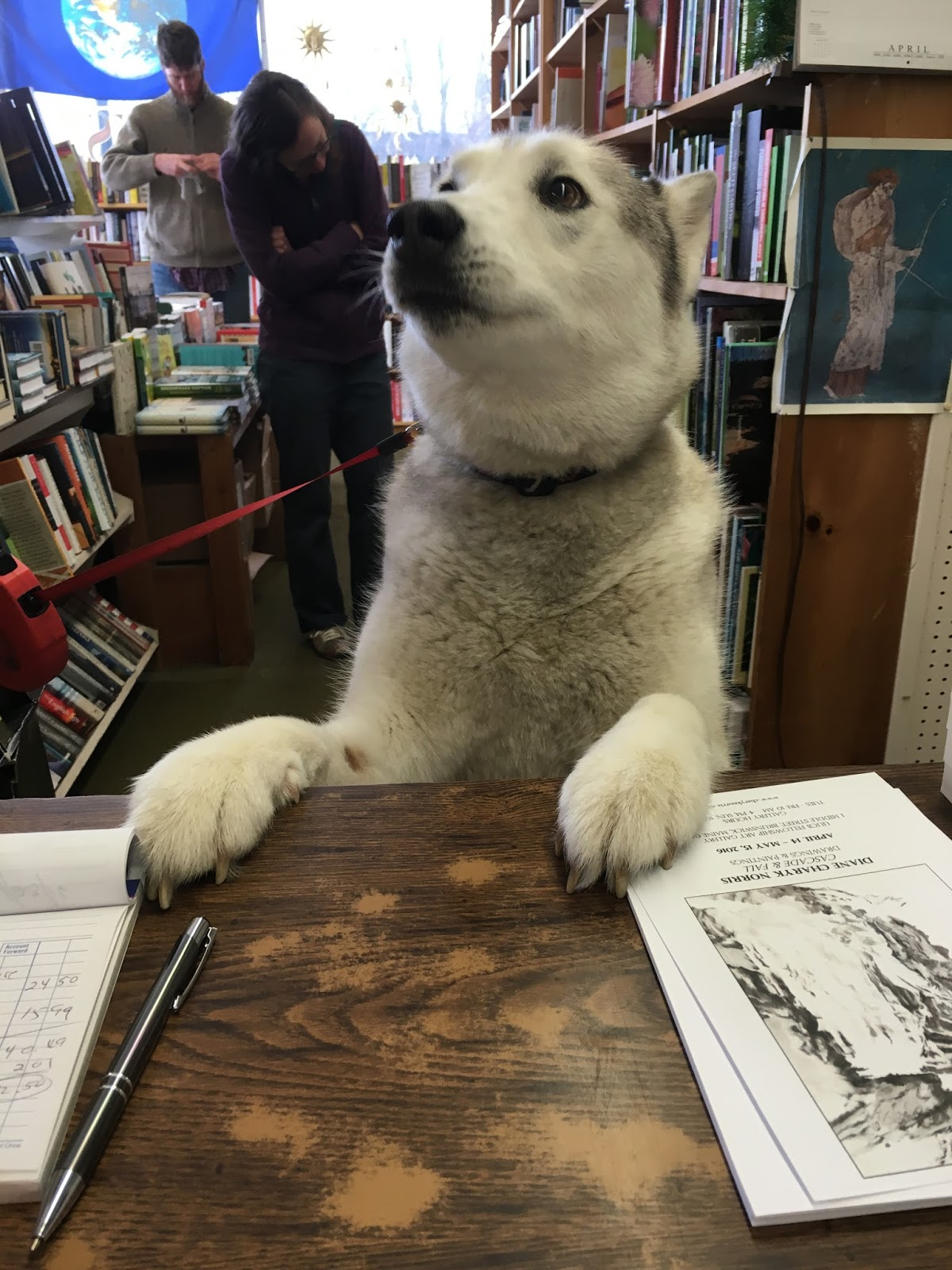 Nikita Wants To Know Where The Books About Dogs Are