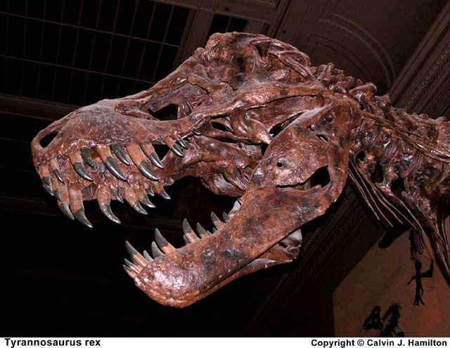 Outrageous Heads Led to Outrageously Large Dinosaurs