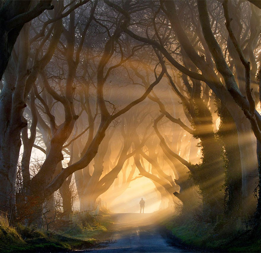 #16. The Dark Hedges in Northern Ireland - 16 Of The Most Magnificent Trees In The World.