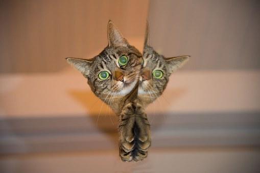 Kucing Hobi Mencakar