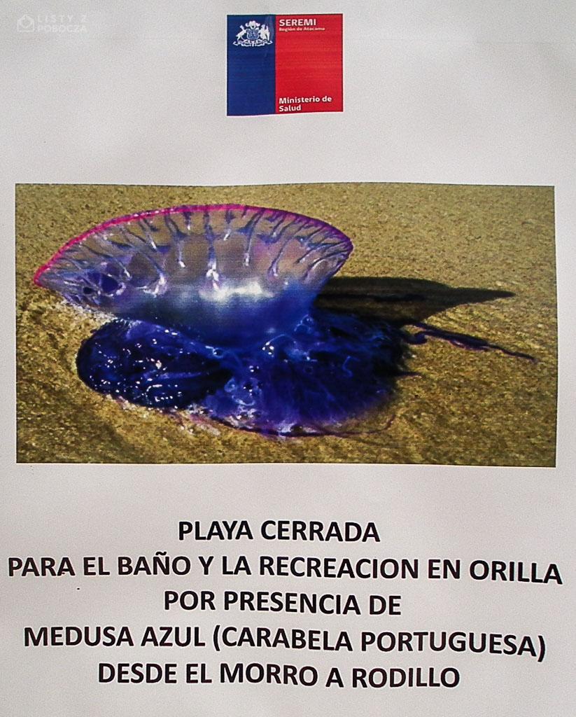 Ostrzeżenie o zamknięciu plaż ze względu na inwazję żeglarzy portugalskich