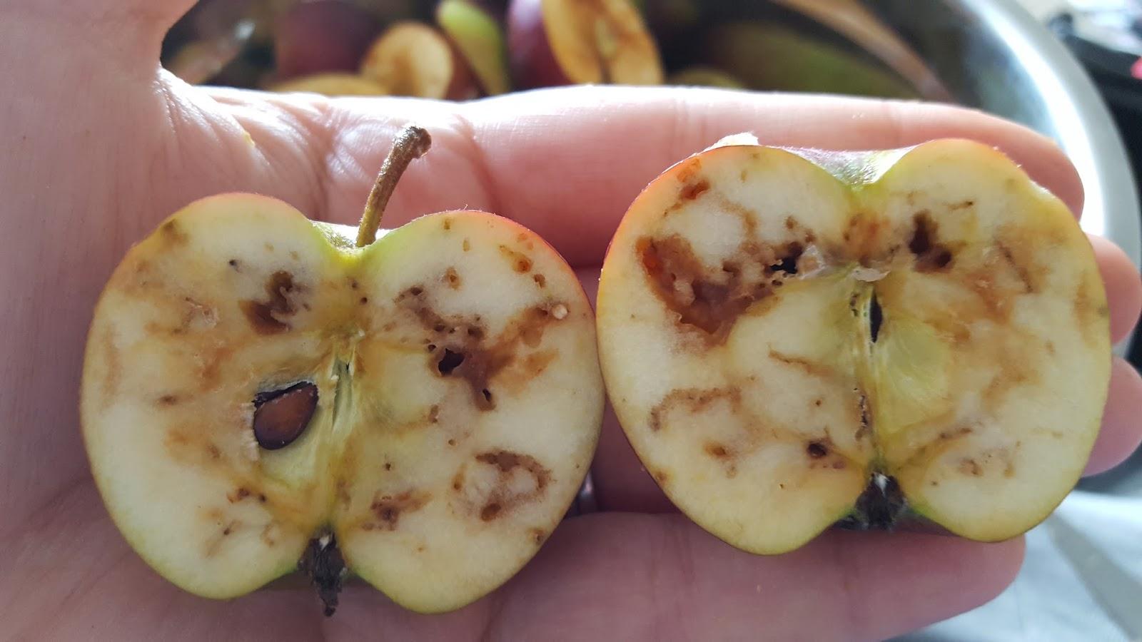 Amazoncom Kikkerland Fruit Memo Pad Apple Office Products