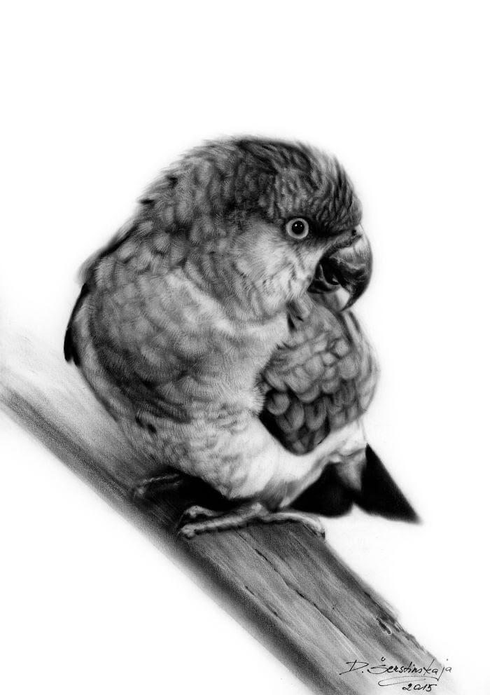 11-Parakeet-Danguole-Serstinskaja-Animal-Dry-Brush-Technique-Paintings-www-designstack-co