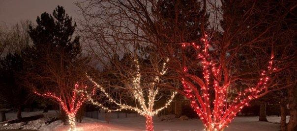 Bright Christmas Branch Wrapping Trees The Right Way