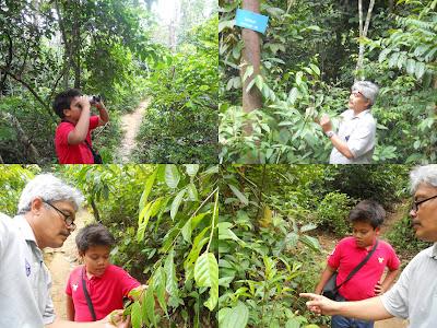 Image result for Kota damansara community forest dr mat
