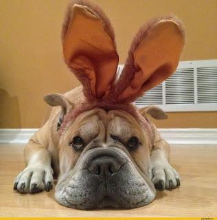 Witzige Osterbilder - Hund mit Osterhasenohren
