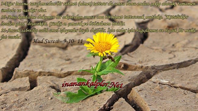 Ümitsiz Ve Nankör, Şımarık Ve Böbürlenen Kişi Nasıl Olur - www.inanankalpler.net