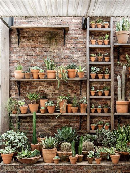 jardim vertical criado com diversos vasos dispostos em prateleiras e escadas de madeira