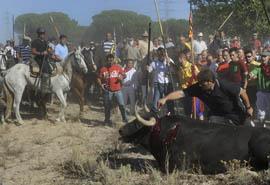 El toro de la vega - Tordesillas