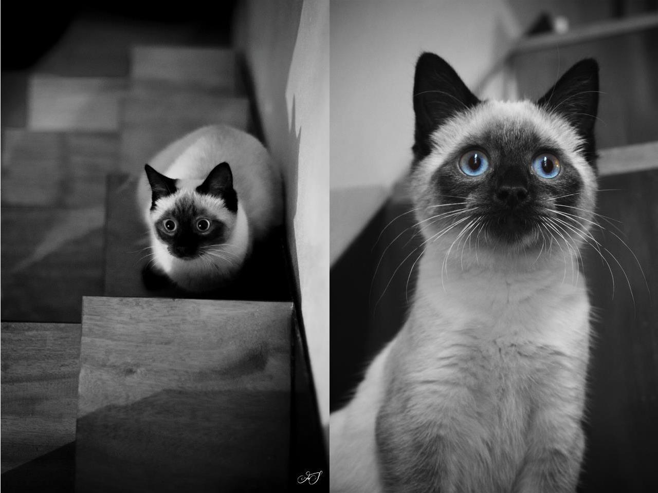 J adore la retrouver après un long moment d absence, parce que d habitude  elle ne se laisse pas trop tripoter, c est un chat indépendant tu vois, ... a72f9bc3ac47