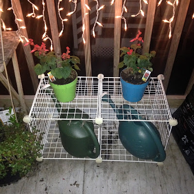 Watering Can Storage and Potted Red Salvia Annual in Urban Container Garden