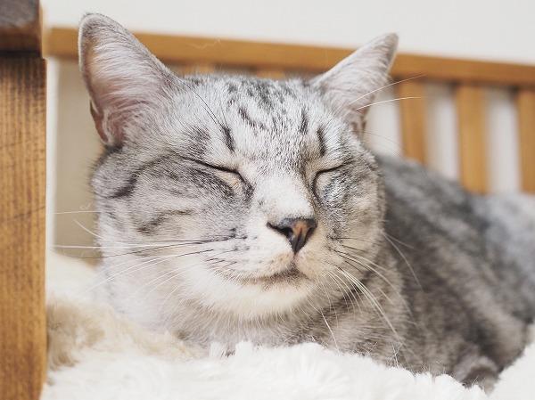 菩薩顔の猫