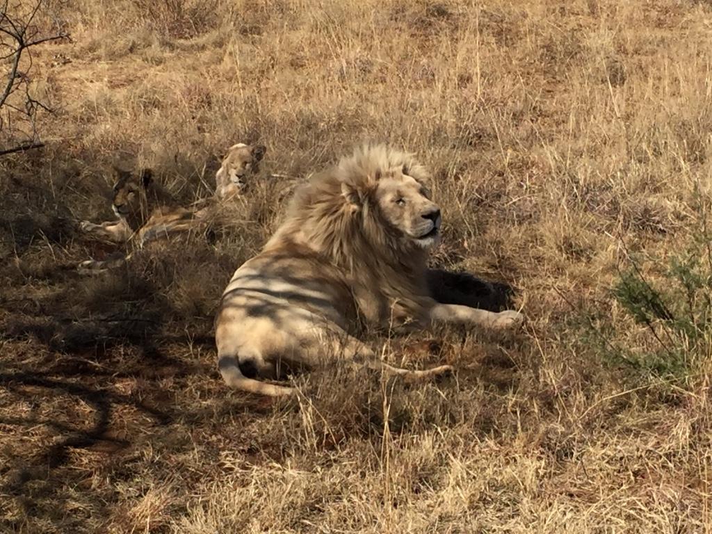 Lion & Safari Park