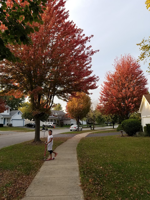 street with red color maple trees in fall colors