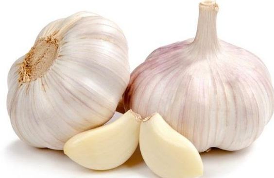Tanaman Bawang Putih untuk Masakan dan Menjaga Kesehatan Tubuh