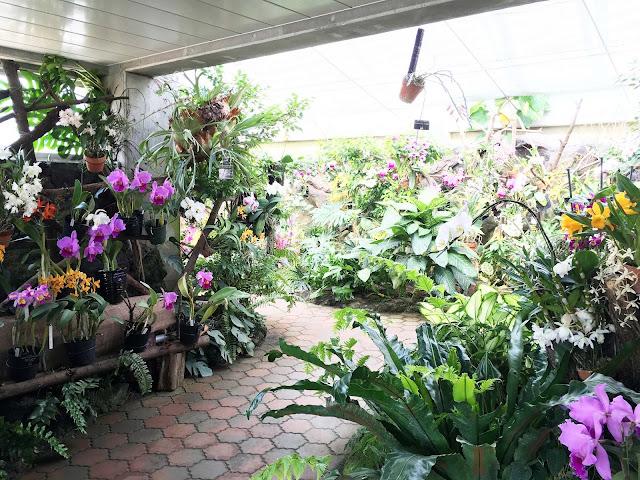 ランエリア ときわ公園、植物園もリニューアル。 プラントハンター西畠清順が手がける?