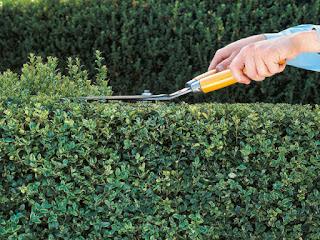 Dengan Cara Mudah ini, Anda Tak Perlu Lagi Menyewa Tukang Kebun Untuk Memangkas Rapi Tanaman Anda .