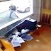 [VÍDEO]Policial é afastado após invasão a condomínio em Curitiba
