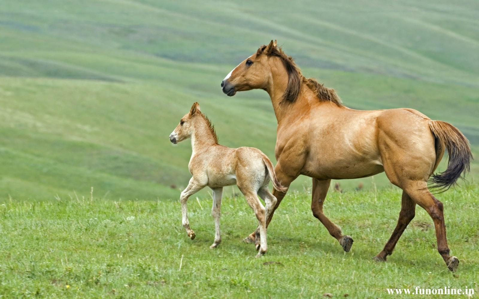 Wild Horses Wallpapers Wallpaper
