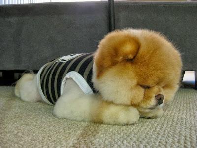 Anjing Yang Lucu