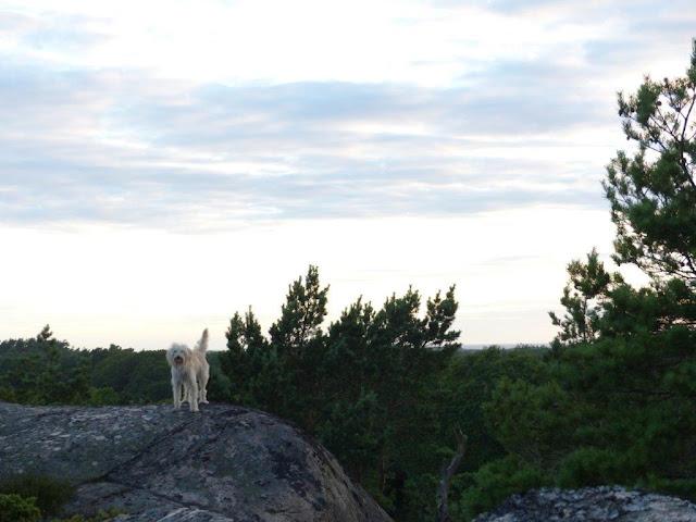 Schweden Campingtrip Urlaub mit Hund Rundreise Roadtrip Sommer