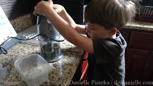 Shredding dried herbs in a blender.