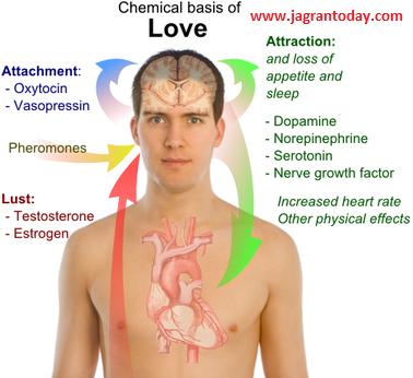 मेडिकल साइंस बताएगी आखिर क्या है प्यार