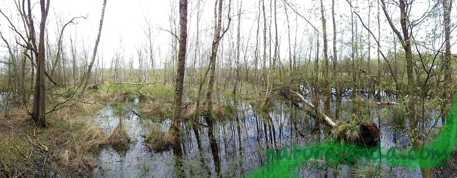 panoramica 2 del pantano con arboles