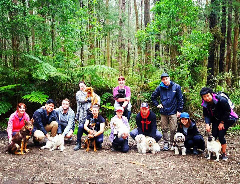 Join Paws Explores Adventures For A Fantastic Hiking And Camping Adventure From October 6th To 8th With Your Dog Friends Family In Support Of Two