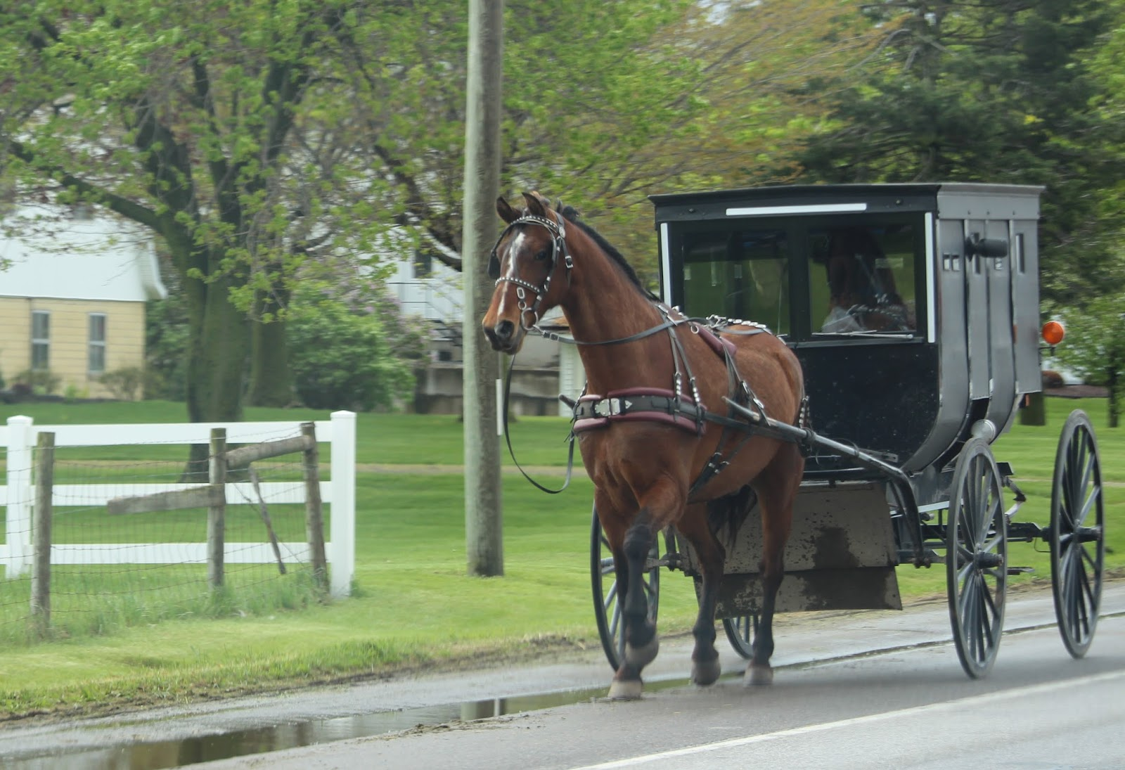an analysis of the narrator of the amish farmer One of the local residents is an amish farmer,  in an epilogue, the narrator says that there have not been further incidents since the trial, .