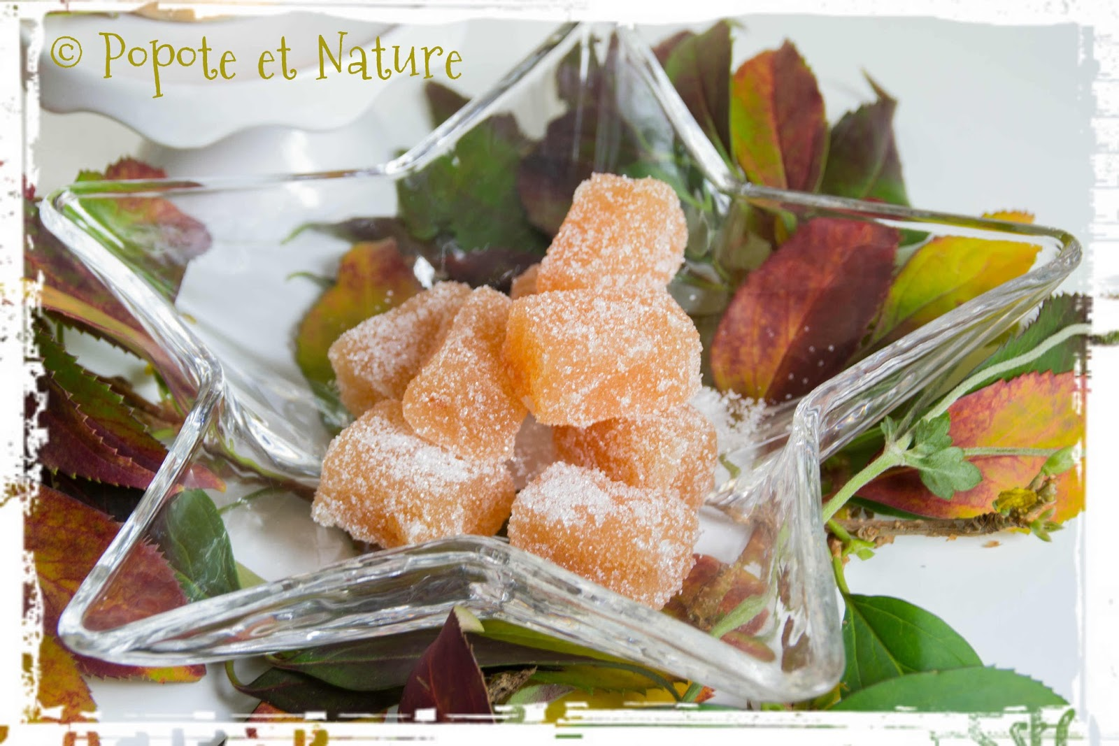 popote et nature coing coing